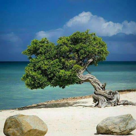 Tina's place - Oranjestad