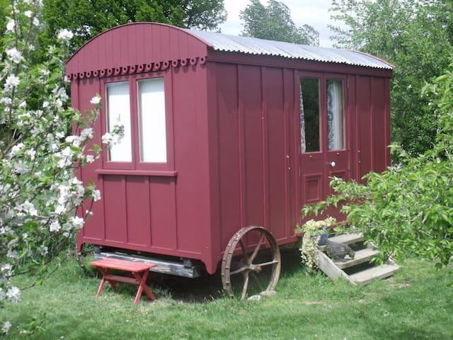 Shepherd's Hut Glamping - Motupiko - Hütte
