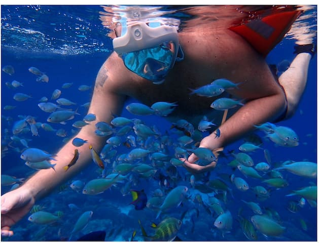 Snorkeling in Pamilacan , photos courtesy of guest Ms C Deleos .