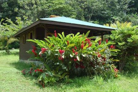 eco lodge surrounded by rainforest - Egyéb