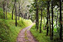 Rejuvenate yourself at Rahut Tree House