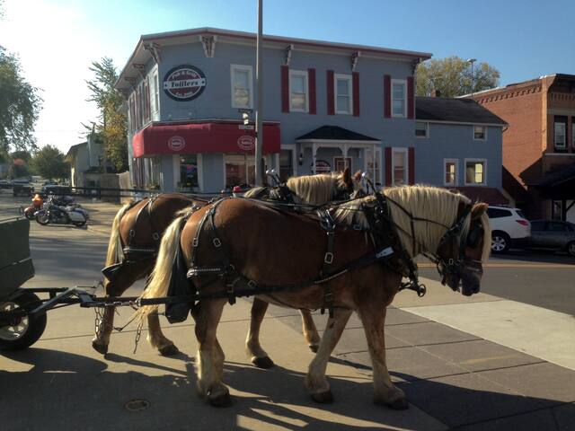 Take a ride in a horse drawn buggy