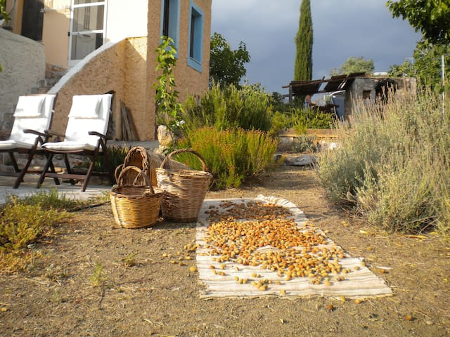 Sparta Gaia, almonds from our trees, September