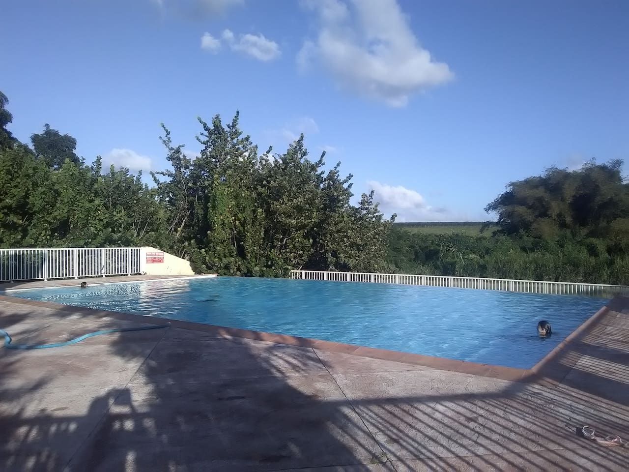 La piscine collective