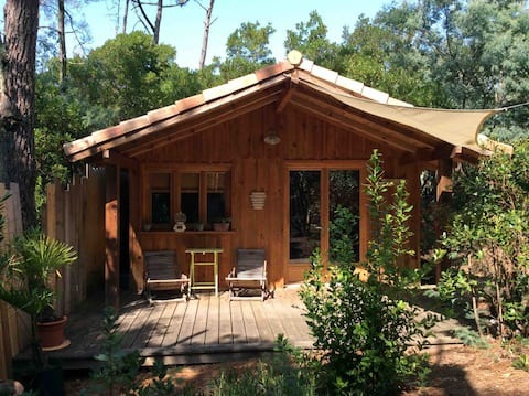 Charmante cabane au fond du jardin, sous les pins.
