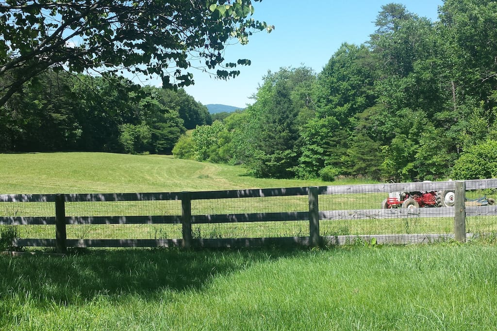 Summer view of pasture.