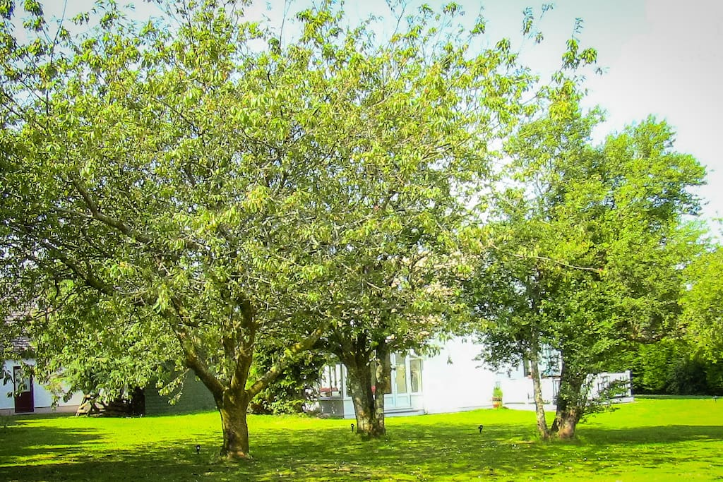 Large Orchard Garden