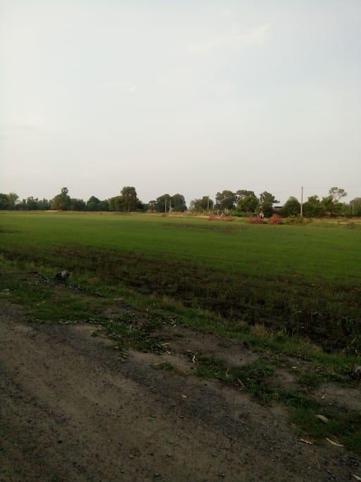 Rice field plantation