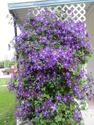 Clematis on front porch.