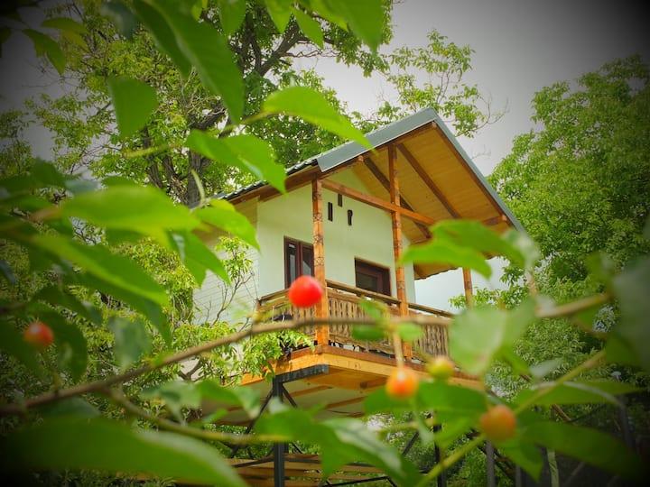 Căsuţa cu Miez - Căsuţă în Nuc / Treehouse