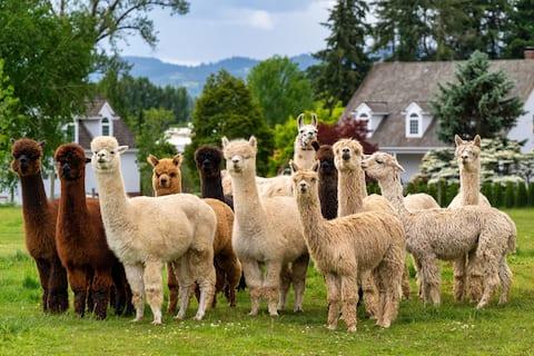 Alpaca Farm Stay