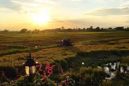Daisy House - San Kamphaeng - Bed & Breakfast
