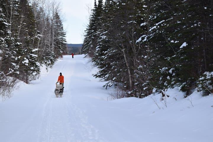 Randonnées de chiens de traîneau offertes en hiver... Directement à partir du gîte