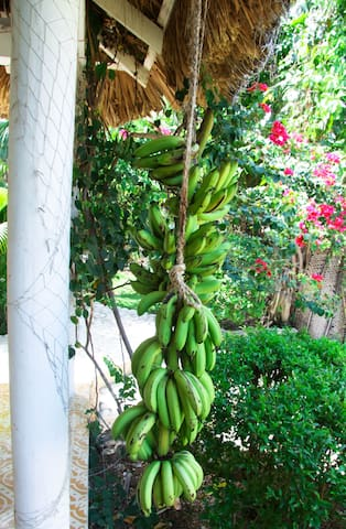 Your hostess grows her own organic fruits and veggies for the table. Where else in Haiti can you get eco-luxury and farm to table in the same space?