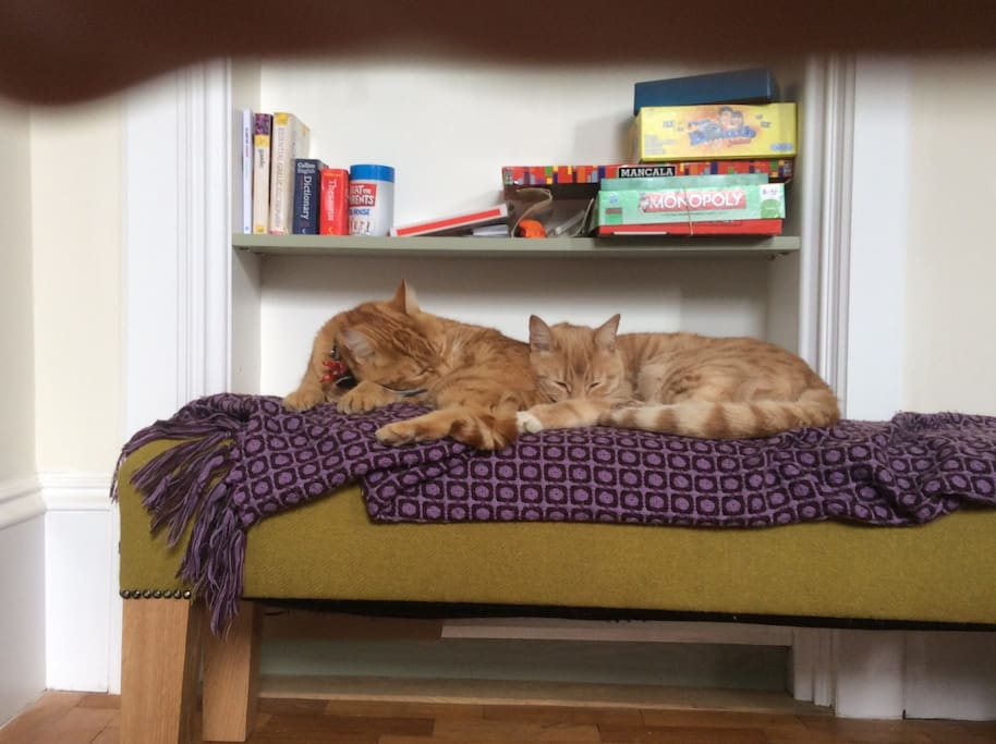 Our cats-Toffee and Milis usually asleep upstairs