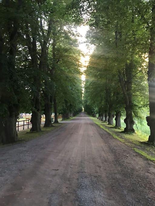 En 900 meter lång lindallé från 1762 leder från Hyltinge kyrka till boendet och Sparreholms slott.