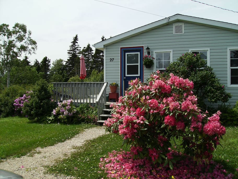 Newmooncottage in full perennial bloom!