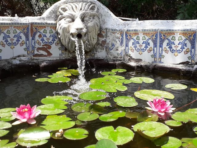 Lily pond, home to many frogs