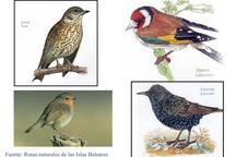 Un ejemplo de los múltiples pájaros que se ven y oyen en nuestra finca.  An example of the many birds that see and hear on our farm.