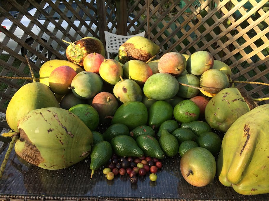 free mangos avocados, coconuts and cherries when in sesson for all my guests