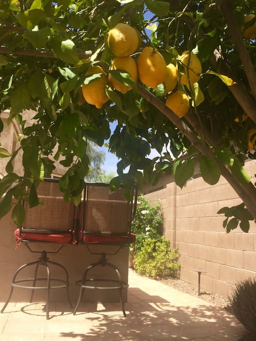 There is a prolifically productive lemon tree in the back yard.  The lemons are ripe and ready for you to enjoy from January to early May.  So fun to make your own lemonade!