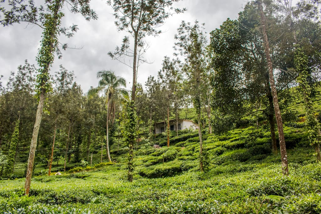 Take long walks through the plantations, breathe in the invigorating scents of coffee