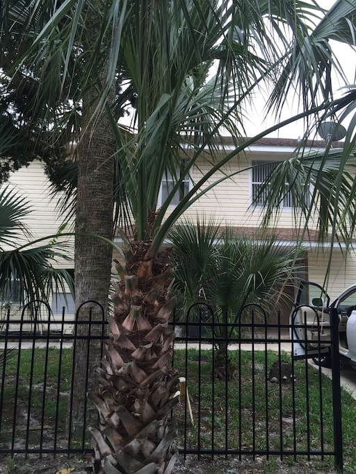 Florida palms swaying in the balmy ocean breeze.