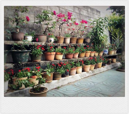 前院的花草