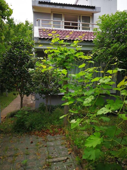 民宿前院景观