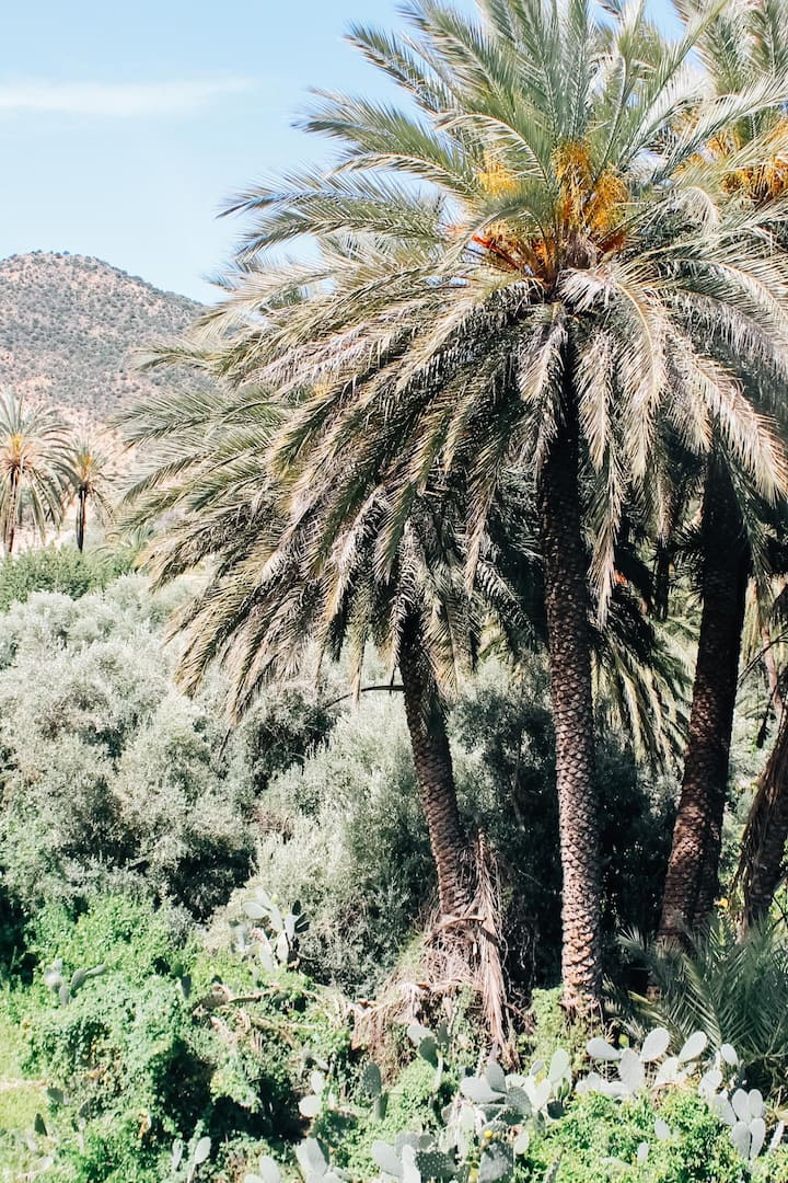Date Palms tower the trails