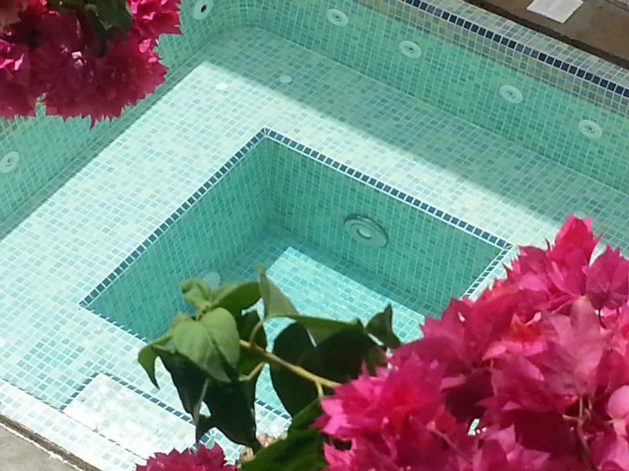 Plunge pool in the garden, ocean views.