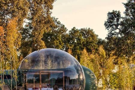 Sky Bubble Platón | El Toril Glamping Experience