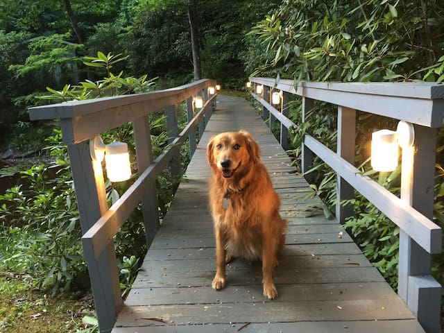 Bridge to guest house. Golden Retriever guard not always present.