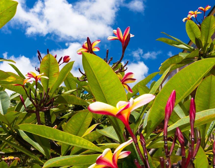 Our Hawaiian gardens