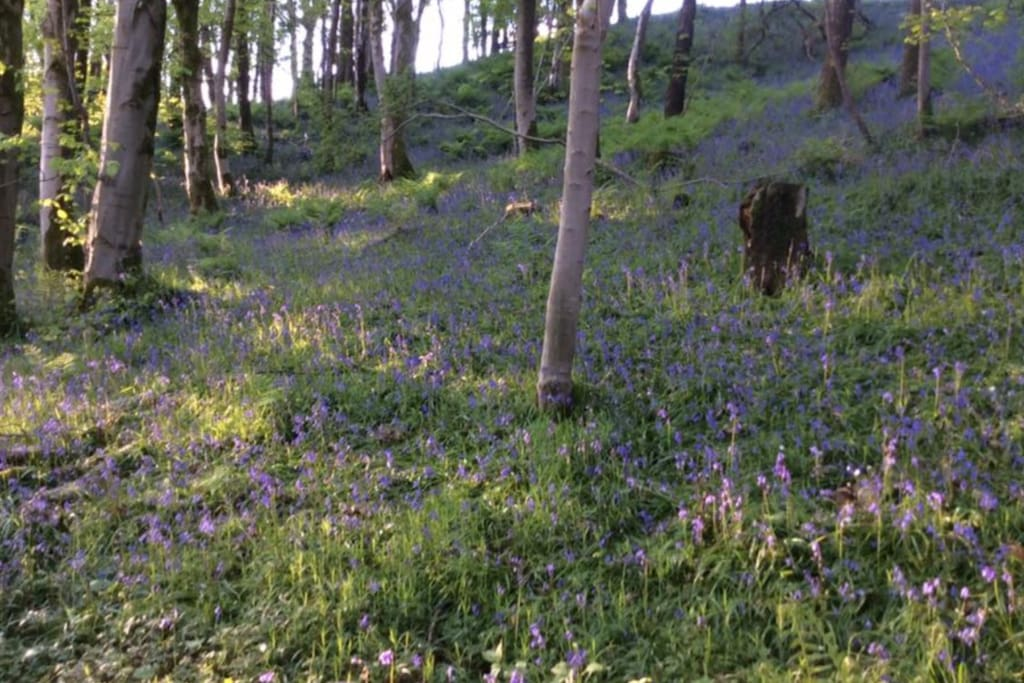 Springwood Camping our beautiful bluebell wood