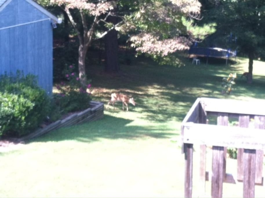 Trampoline (and part of playset) in backyard...also some deer from the woods behind our yard