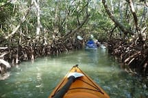 Kayak Tours through the Mangrove  tunnels