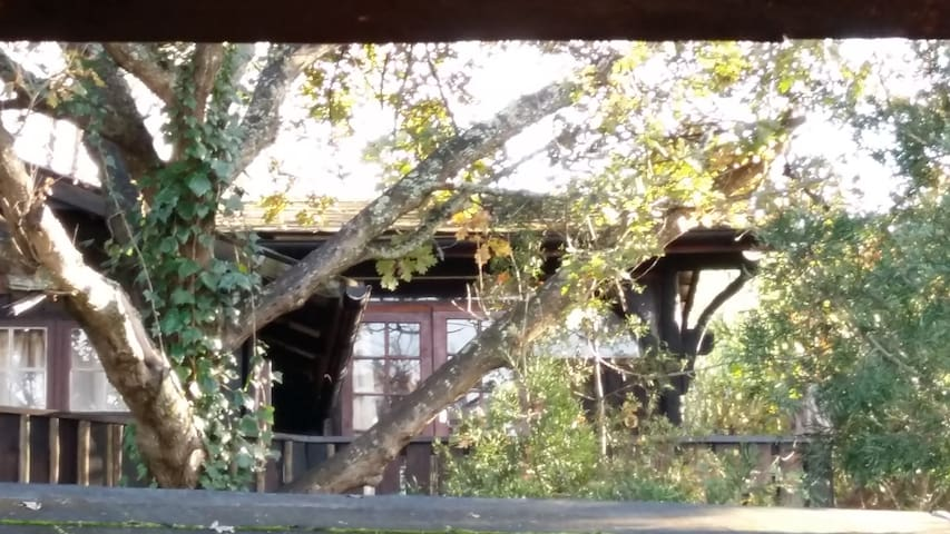 Knysna Glampackers Treetops Lofts - Knysna - Loft