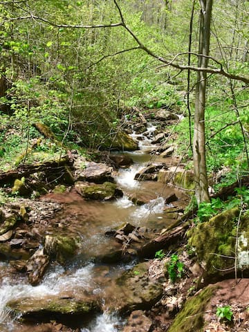 The sound of this  lovely creek that flows through our property will instantly relax you--nature's whte noise.
