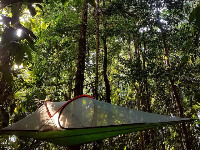 Treehouse Tent Camp: Howler & Butterfly Habitats