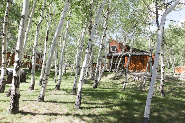 A view of Mt. Antero Chalet through the aspen trees