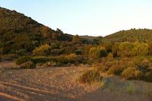 Vounaki Beach Forest of pine trees and perennial sedars