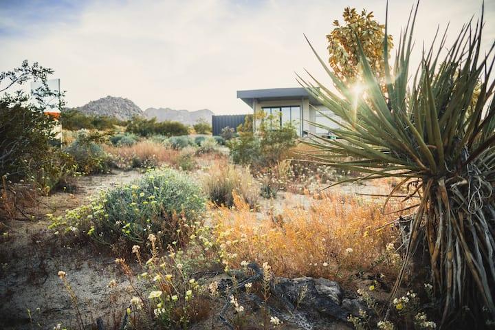 Caelum Joshua Tree - Urban Design in Rustic Desert