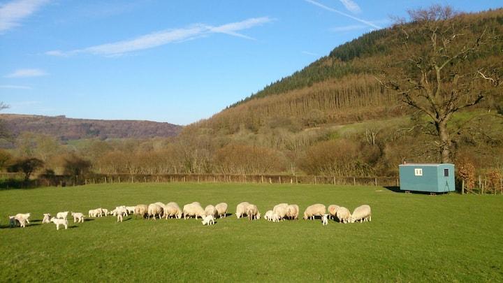 Aber Farm Shepherd's Hut (Y Berllan)