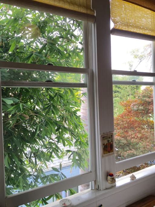 View from the bed to garden