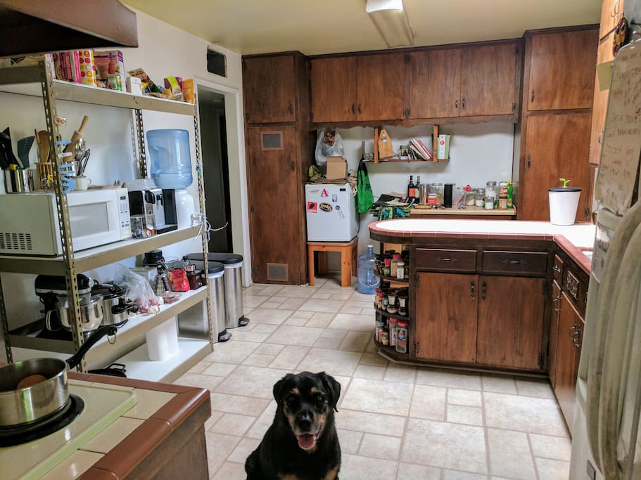 The kitchen from the dining room doorway. Also, that's Atticus!