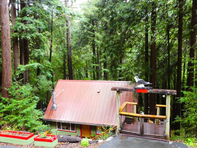 Cozy Cabin in Redwoods--Near Wine Country, Ocean - Monte Rio - Cabaña