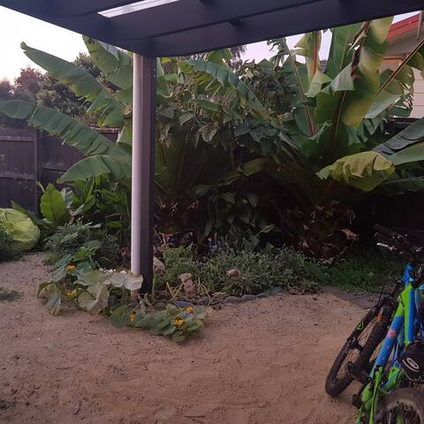 Your tropical garden view and bikes