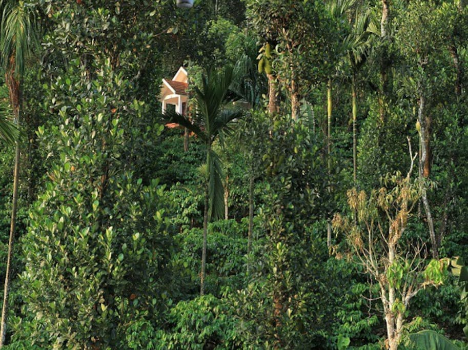 The villa in 30 acre coffee plantation