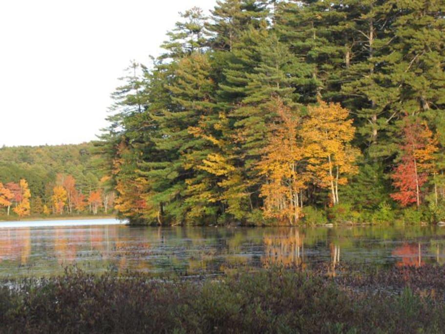 Edge of the lake in fall!